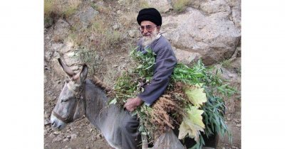 Khamenei's donkey خر خامنه ای